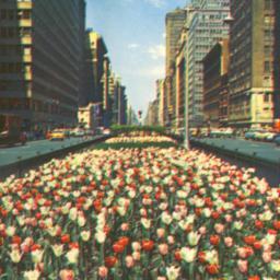 [Park Avenue Looking North]