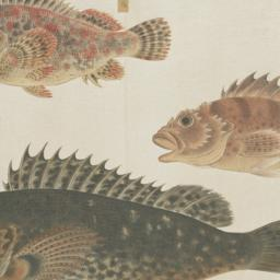 Group of Four Fish from the...