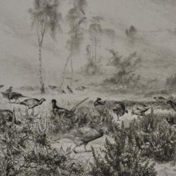 Pheasants at Dawn