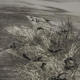 Teal Among the Reeds