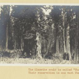 View of the Klamath Forest,...