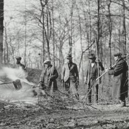 Men Creating Clearing in Woods
