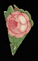 View of paper folded with flower on top